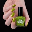 Color Flecks Green Chrysanthemum