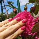 piCture pOlish Rose (Rose) (author - EkaterinaS)