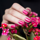 piCture pOlish Rose (author - Katenokr)