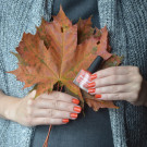 piCture pOlish Autumn (Autumn) (автор - tanyshamarkizonya)
